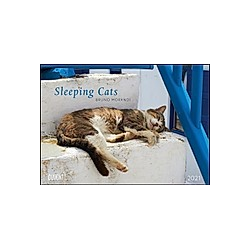 Sleeping Cats 2021