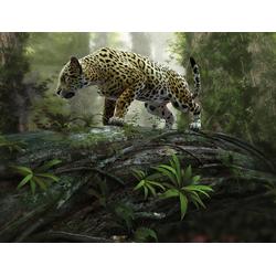 Fototapete Jaguar on the Prowl, glatt 3 m x 2,23 m