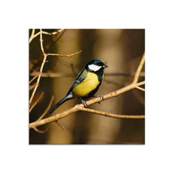 Artland Glasbild Kohlmeise im Wald, Vögel (1 Stück) 30 cm x 30 cm