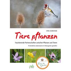 Tiere pflanzen als Buch von Ulrike Aufderheide