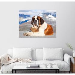 Posterlounge Wandbild, Bernhardiner Rettungshund 80 cm x 60 cm