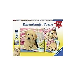 Kuschelige Hündchen (Puzzle)