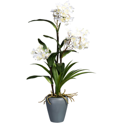 Creativ green Kunstorchidee Dendrobie (1 Stück) weiß Kunstorchideen Kunstpflanzen Wohnaccessoires