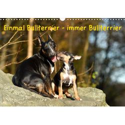 Einmal Bullterrier - immer Bullterrier (Wandkalender 2021 DIN A3 quer)