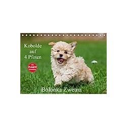 Kobolde auf 4 Pfoten - Bolonka Zwetna (Tischkalender 2021 DIN A5 quer)