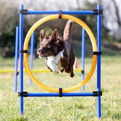 Reifen-Set Fun-Agility, Höhe: ca. 100 cm, Durchmesser:  ca. 60 cm - ca. 60 cm
