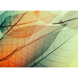 living walls Fototapete Designwalls Limpid Leaf 2, glatt, (5 St)