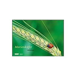Marienkäfer 2021
