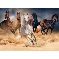 Papermoon Fototapete Horse Herd in Gallop, glatt 2,5 m x 1,86 m
