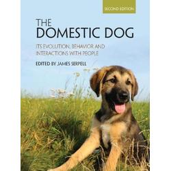 Domestic Dog