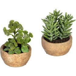 Künstliche Zimmerpflanze Sukkulenten Sedum und Aloe Sukkulenten Sedum und Aloe, Creativ green, Höhe 17 cm, im Zementtopf, 2er Set