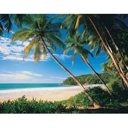 Fototapete Palmbeach, glatt 2 m x 1,49 m