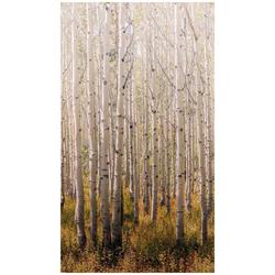 Bodenmeister Fototapete Birken-Wald