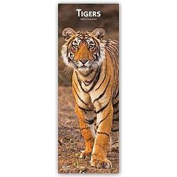 Tigers - Tiger 2021