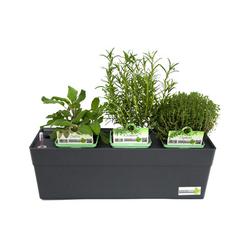 Greenbar »Grillkräuter« - Tchibo - Grau