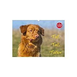 Toll, toll, Toller (Wandkalender 2021 DIN A3 quer)