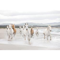 Fototapete Weiße Pferde, 368 x 254 cm mehrfarbig