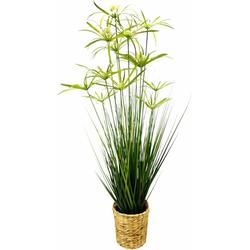 Kunstpflanze Zyperngras in Wasserhyazinthentopf Zyperngras, Höhe 120 cm