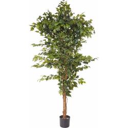Kunstpflanze Ficus Benjamini Ficus Benjamini, Creativ green, Höhe 150 cm 23 cm x 150 cm