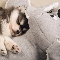 Beeztees Puppy XL-Kuschelspielzeug Boomba grau