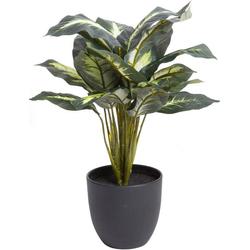 Künstliche Zimmerpflanze Dieffenbachia Dieffenbachia, Botanic-Haus, Höhe 45 cm