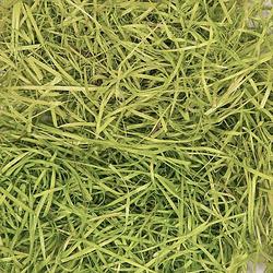 Ostergras, hellgrün, 100 g