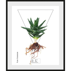 queence Bild Aloe vera, (1 Stück) 40 cm x 50 cm
