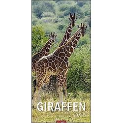 Giraffen XL 2021