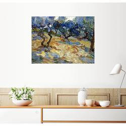 Posterlounge Wandbild, Olivenbäume 90 cm x 70 cm