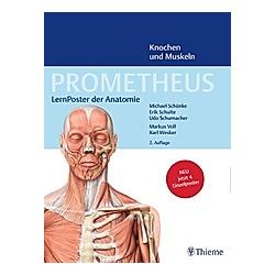 Prometheus: LernPoster der Anatomie, Knochen und Muskeln, 4 Poster