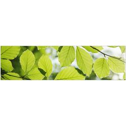 Küchenrückwand fixy Buchenblätter grün 220 cm