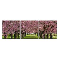 Bilderdepot24 Leinwandbild, Leinwandbild - Kirschblüten 90 cm x 30 cm