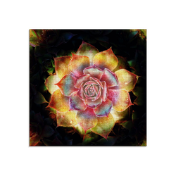 Artland Glasbild Hauswurz, Pflanzen (1 Stück)