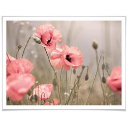 Wall-Art Poster Romantische Mohnblume, Blumen (1 Stück) 80 cm x 60 cm x 0,1 cm