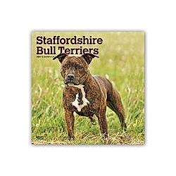 Staffordshire Bull Terriers - Staffordshire Bull Terrier 2021 - 16-Monatskalender mit freier DogDays-App