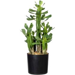 Künstliche Zimmerpflanze Sukkulente Euphorbie Sukkulente Euphorbie, Creativ green, Höhe 40 cm