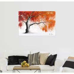 Posterlounge Wandbild, Oranger Ahornbaum 100 cm x 70 cm