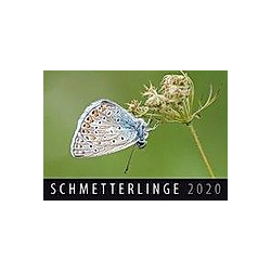 Schmetterlinge 2020