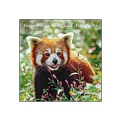 Kleiner Panda / Red Panda / Petit Panda 2021