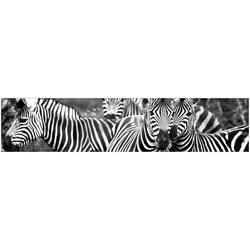 MySpotti Küchenrückwand fixy Zebra herd, selbstklebende und flexible Küchenrückwand-Folie 280 cm x 60 cm