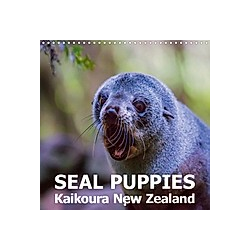 Seal Puppies, Kaikoura New Zealand (Wall Calendar 2021 300 × 300 mm Square)