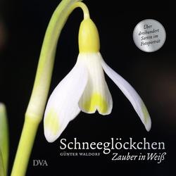 Schneeglöckchen als Buch von Günter Waldorf