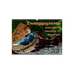 Zwerggarnelen - gepanzerte Juwelen im Aquarium (Wandkalender 2021 DIN A3 quer) - Kalender
