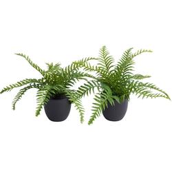 Künstliche Zimmerpflanze Farn im Topf Farn, Botanic-Haus, Höhe 23 cm grün