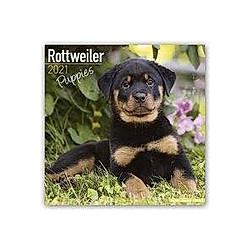 Rottweiler Puppies - Rottweiler Welpen 2021