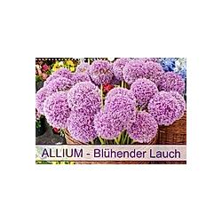 Allium Blühender Lauch (Wandkalender 2021 DIN A3 quer)
