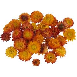 Kunstpflanze Strohblumenköpfe in Box, VBS, 20 - 30 g orange