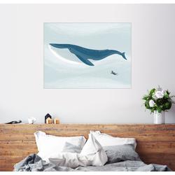 Posterlounge Wandbild, Blauwal 70 cm x 50 cm