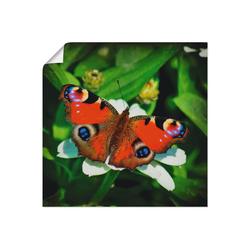 Artland Wandbild Tagpfauenauge, Insekten (1 Stück) 70 cm x 70 cm
