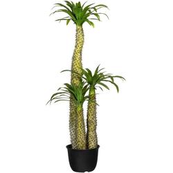 Künstliche Zimmerpflanze Madagaskarpalme Pachypodium Madagaskarpalme Pachypodium, Creativ green, Höhe 170 cm
